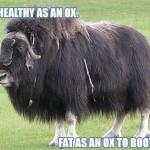 fat-ox